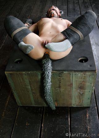 Красавица с анальной пробкой в заднице в подвале играет роль секси-кошечки для хозяина